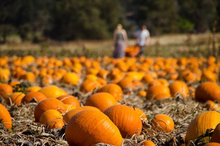 Top Kansas City Pumpkin Patches